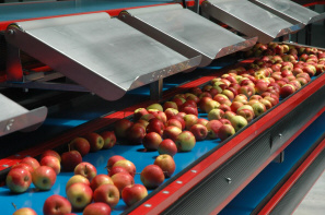 JANFRUIT: Production and distribution of fruit vegetables, apple producer - Poland
